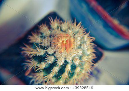 Desert Cactus Closeup With Orange Flower