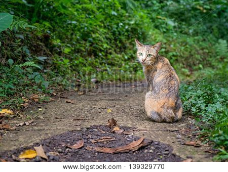 Little fluffy kitten sitting on a street backwards and watching in Bali forest