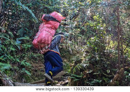Ranau, Sabah-March 12,2016: Mountain porter transporting heavy luggage through Timpohon trail to Laban Rata. A porter is allowed to carry items weighing only a total of 10kg from Timpohon to Laban Rata.