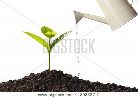 Sprout watered from a watering can isolated on white background