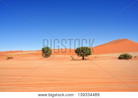 Beautiful landscape with dunes and trees at sunrise Sossusvlei Namib Naukluft National Park Namibia