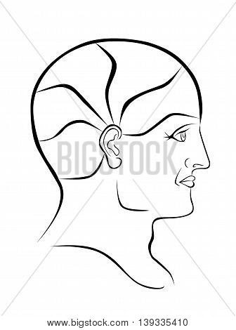 Vector Phrenolgy Head Blank Outline with 5 Brain Sectors