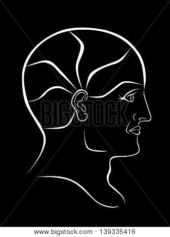 Vector Phrenolgy Head White Outline with 5 Brain Sectors