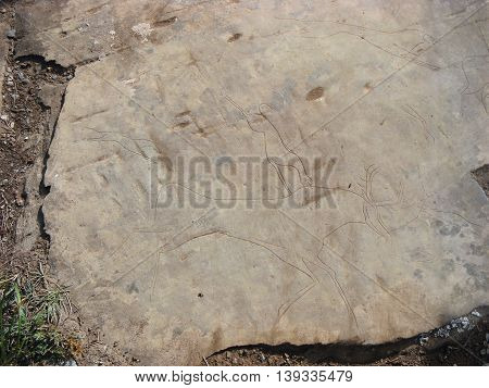 Predator preys on deer. Animals petroglyphs carved in rocks. Siberian Altai Mountains petroglyphs Russia