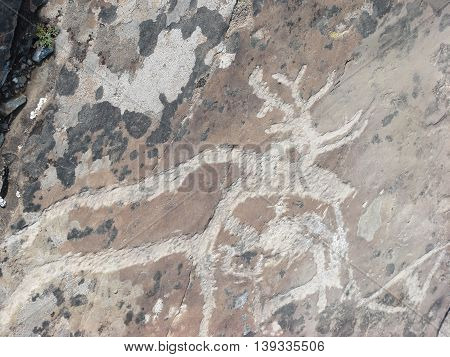 Stone with deer animal petroglyphs carved in rocks. Siberian Altai Mountains petroglyphs Russia