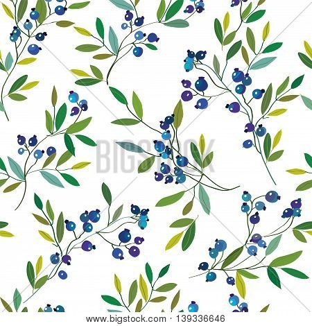 Blueberry seamless graphic pattern. Vector hand drawn illustration.