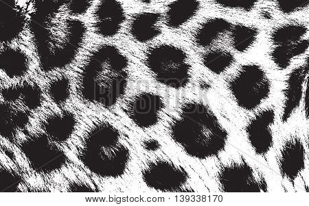 Distressed overlay texture of natural animal fur grunge vector background.