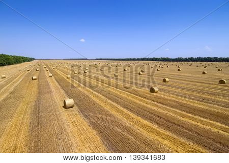 Large field after harvesting with stacks of collected wheat and blue sky