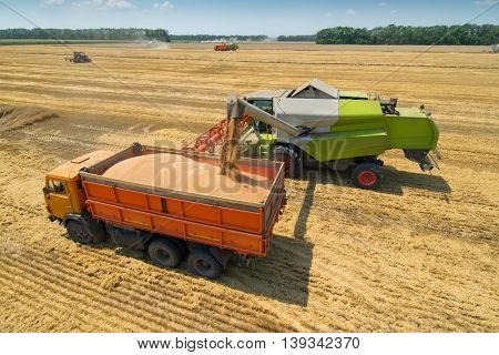 Harvester loading grain into truck at field on sunny hot day during harvest time