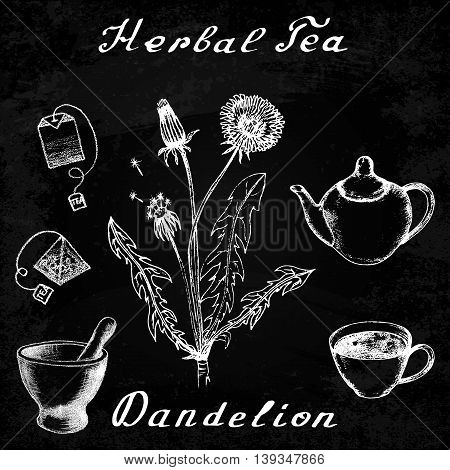 Dandelion hand drawn sketch botanical illustration. Vector drawing. Herbal tea elements - cup, teapot, kettle, tea bag, bag, mortar and pestle. Medical herbs. Lettering in English. Effect chalk board