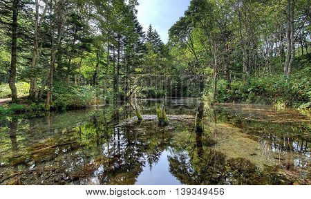 Swamp in the woods. Clear water in the lake in the woods.