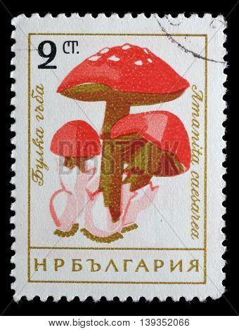 ZAGREB, CROATIA - JUNE 25: a stamp printed in Bulgaria shows Caesars mushroom, Amanita caesarea, circa 1961, on June 25, 2014, Zagreb, Croatia