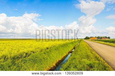 Polder landscape with a large field of yellow blossoming rapeseed plants a road and a farm in the background. It's a sunny day in the summer season.