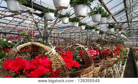 Inside image of a light hot and warm greenhouse with many kinds of flowers.