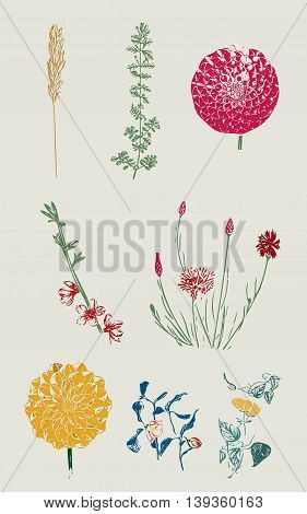 plants, flowers,flower, plant,briar, brier,bush, green, flower figure, nature, natural, wild,