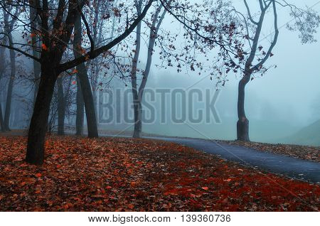 Autumn Foggy Alley - Beautiful Autumn Landscape