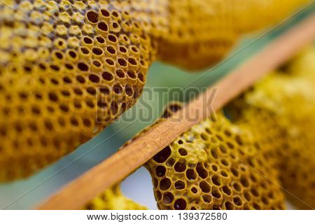 Honeycomb cells with honey. Beekeeping and apiary