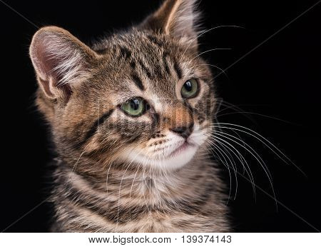 Cute little kitten with green eyes over black background