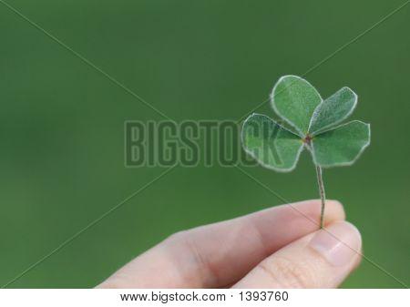 Clover 4 Leaf