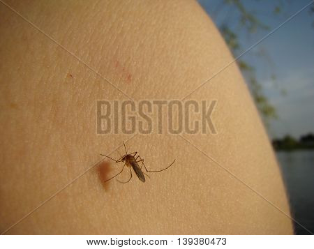 mosquitoes drink the blood of a human body sitting on