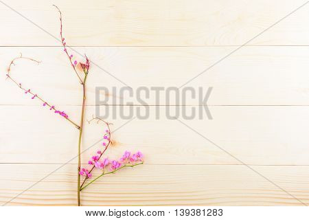 Beautiful pink flowers on wooden background or backdrop