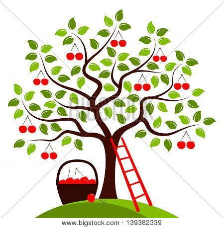vector cherry tree, ladder and basket of cherries isolated on white background