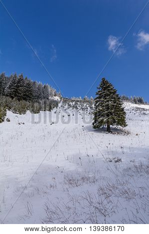 Beautiful Winter Landscape With Snow Covered Trees. Landscape Of Snow-covered Trees On A Mountain Tr