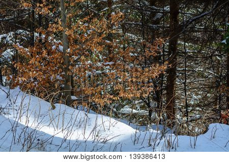 Close Up With Dry Grass And Winter Trees. Mountain Image With Dried Vegetation And Golden Leaves In
