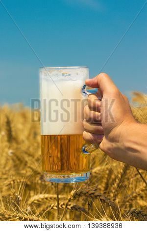 Close up of male hand holding glass mug of beer. Wheat field and blue sky in the background. Beer industry and natural ingredients beverage concepts.