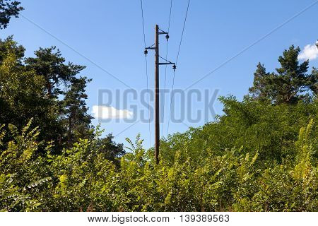 a german telephone pole in a forest