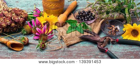 Set Of Medicinal Herbs