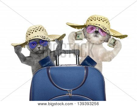 Cat and dog are going on a trip to travel with suitcase -- isolated on white
