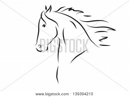 Vector illustration of sketch black and white horse head
