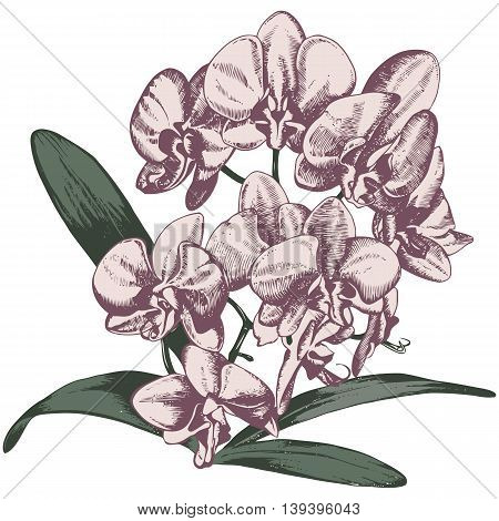 Orchid branch, vector hand drawn illustration in retro style