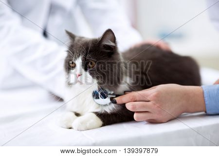 Beautiful and young veterinarian examining a kitten close up