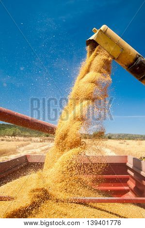 Wheat Harvest Time