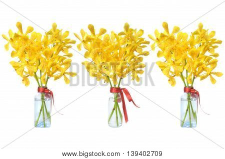 Yellow mokara orchid from Central of Thailand