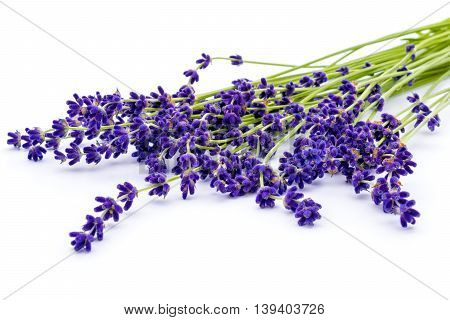 Bunch of lavender flowers isolated on white background. Calmness and relaxation. Perfume and aroma.