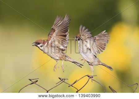 two little birds are sitting and fighting with wire fence