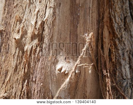 detail of an open trunk of a tree
