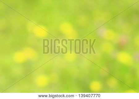 blurred green natural green background with yellow spots