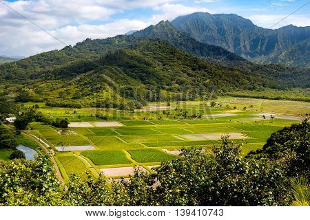 Landscape View Of Hanalei Valley And Green Taro Fields, Kauai
