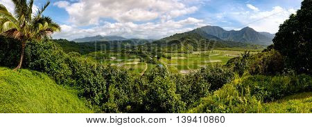 Panoramic View Of Hanalei Valley With Taro Fields And Mountains, Kauai