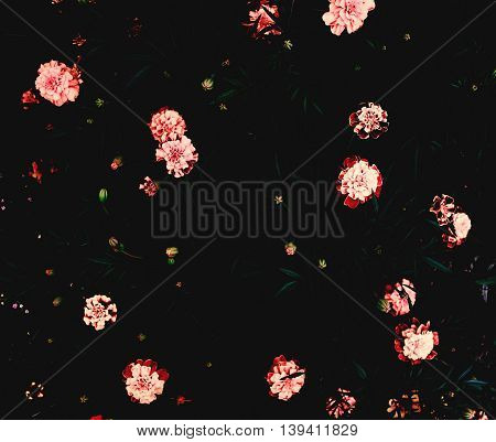 marigold flowers on a dark picture. Dark Photos. Note: Soft Focus at 100 , best at smaller sizes