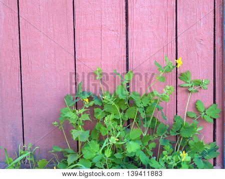 Decorative fern near the house. Landscaping. Decoration plants suburban yard. Caring for plants. Gardening.