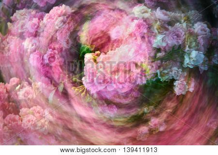 Rose Twirl Abstract.Flowers streaking during a long exposure spin.