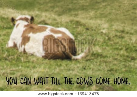 You can wait till the cows come home English saying illustrated