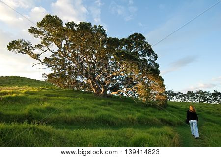 Lonely woman walking at dusk time. New Zealand scenery.