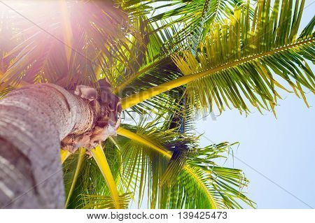 Close up of a palm tree with vibrant green and yellow colors with a corner sunflare
