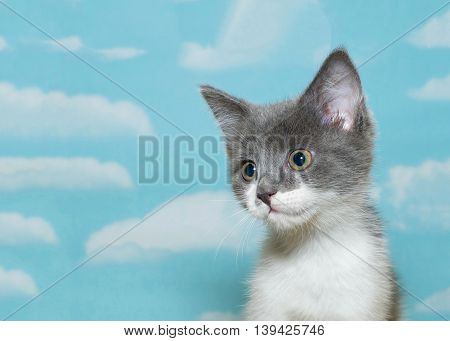 Partial side view portrait of Gray and white kitten looking down and to the side as if spotted something interesting. Cloud pattern on blue background with copy space